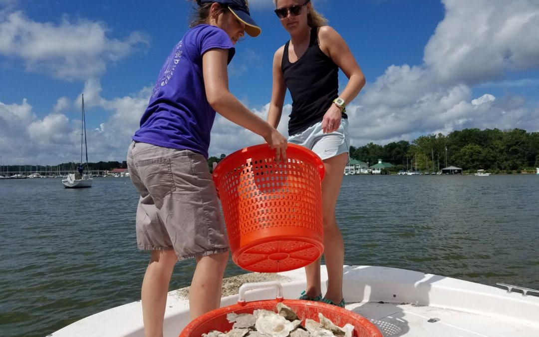FOR interns help with oyster restoration
