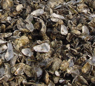 A Partner in the Pollution Diet? Oysters May Be Able to Help Reduce Bay Nitrogen Loads