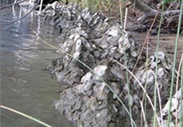 Ready Reef Wetlands Restoration