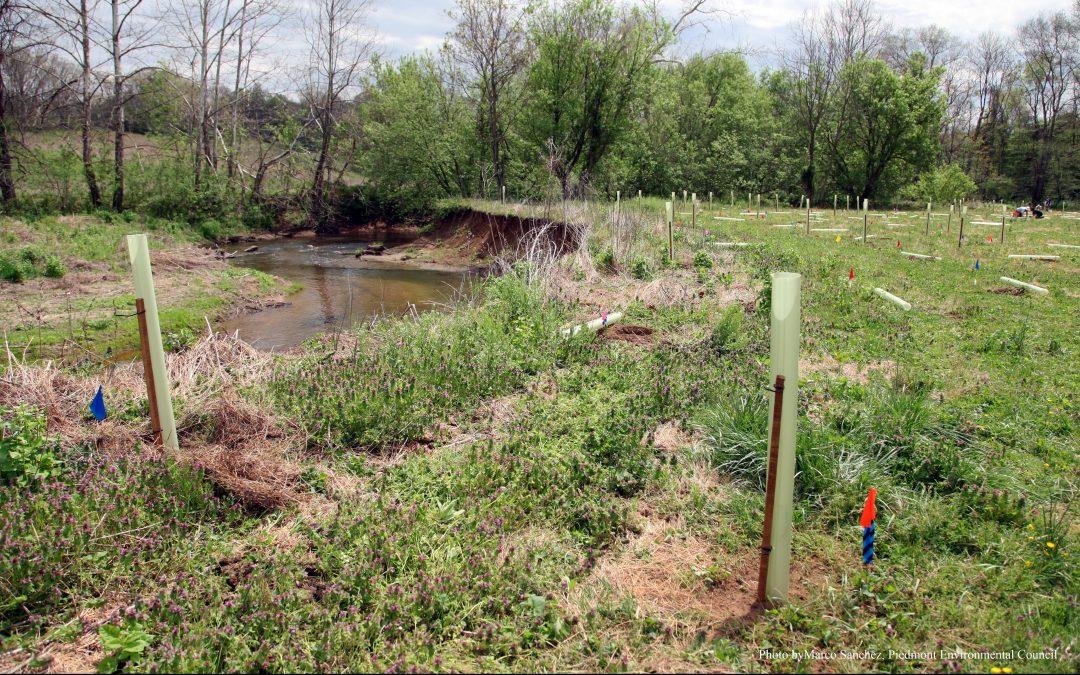 Riparian Buffer Restored on the Rappahannock River