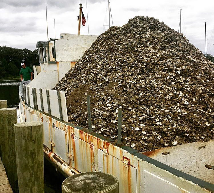 Rebuilding Virginia's Oyster Population Through Restoration and Replenishment Efforts: OUR COMMON AGENDA