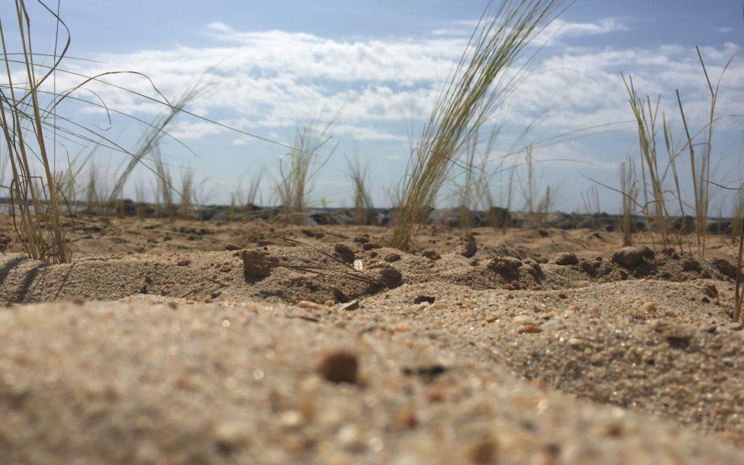 Building natural defenses against natural disasters