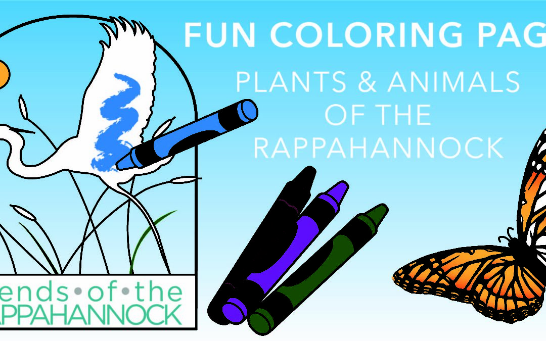 Coloring Book: Plants & Animals of the Rappahannock (Free Download)