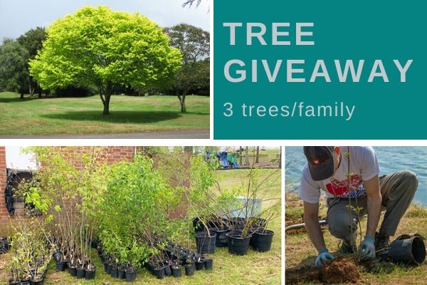 Irvington Tree Giveaway