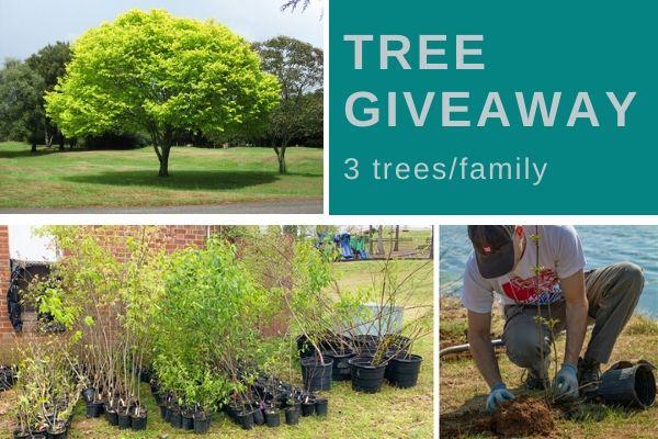Tree saplings tree planting