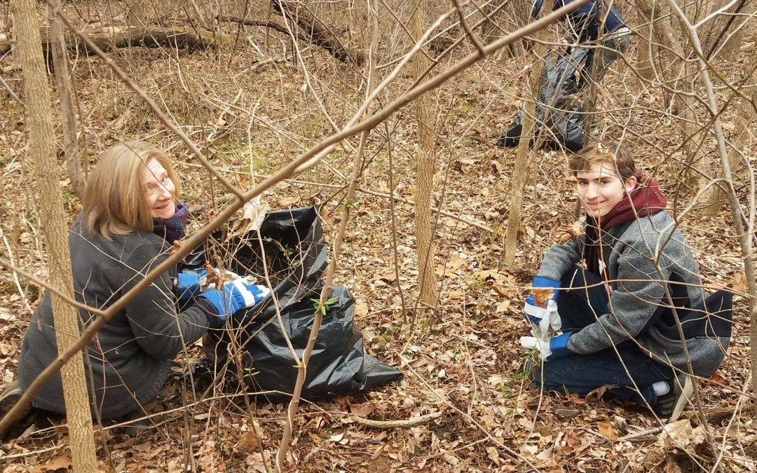 Volunteer: Invasive Plant Removal at FOR Headquarters