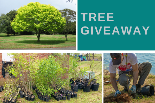 *SOLD OUT* Sperryville Tree Giveaway