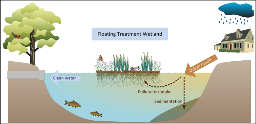 Floating Treatment Wetlands Targeted For City Canal